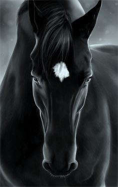 cherrysweetpiecesofme:Black Beauty by Cerinne  Proof that power and grace can coexist beautifully.   ~Charlotte (PixieWinksFairyWhispers)
