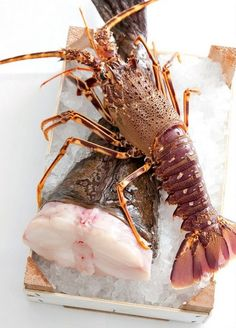 Sea Food  Florida lobsters season begins August 6th #joescrabshack
