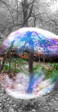 Looking through the Bubble photography nature bubbles cool view