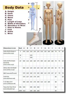 Body dimensions of female 57-60cm BJDs | Flickr - Photo Sharing!