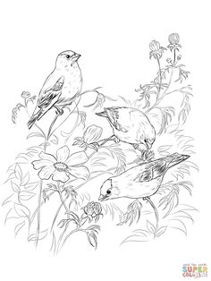 American Goldfinches Coloring Page From Goldfinch Category Select 27448 Printable Crafts Of Cartoons