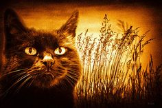 Cat Dreams - Original fine art black and white nature cat photography by Bob Orsillo.  Copyright (c)Bob Orsillo / http://orsillo.com - All Rights Reserved.  Buy art online.  Buy photography online   Vintage toned Black Cat daydream. Reeds and cattails make up the background.