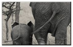 Canvas Prints  Framed and Ready to Hang  Modern Home and Office Interior Decor Elephant Canvas Designs  1 Panel Print  Forest Elephant Print on Canvas  Wall Art -- Read more reviews of the product by visiting the link on the image.