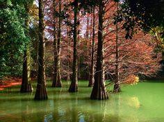 #九大の森  #落羽松  #福岡県  #篠栗町 #森林浴