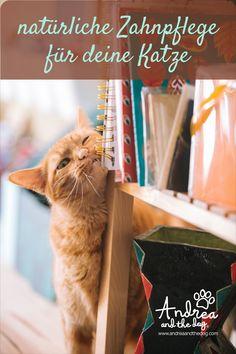 """Das """"Zähnchenweiß"""" von Andrea and the Dog reinigt, schützt und pflegt die Zähne deines Lieblings bei regelmäßiger Anwendung. Bei beginnendem Zahnstein kann mit unserem Zähnchenweiß Abhilfe geschaffen werden. #katzenliebe #andreaandthedog #katzenpflege #naturprodukte #chemiefrei #handmade #steiermark #naturproduktefürkatzen #naturpur #forcats #catlove #zahnpflege Baby Kittens, Kittens Cutest, Cats And Kittens, Pretty Cats, Beautiful Cats, Cat Love Quotes, Schrodingers Cat, Long Cat, Funny Cute Cats"""