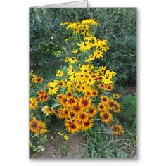 Birthday #Asters Greeting #Card http://www.zazzle.com/rinchen365flower*