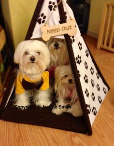 The fab 3 and their little doggy clubhouse!!