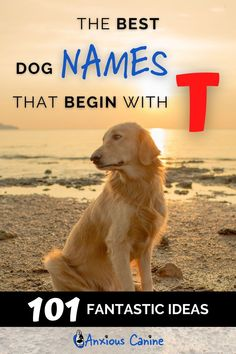Check out our awesome list of dogs names that start with a T. Whether you are looking for a girl dog name starting with T or boy dog name starting with T, you're sure to find dog names that are perfect for your four legged friend with our 101 dog name ideas. #DogNames #BestDogNames #PuppyNames #GirlDogNames #BoyDogNames Girl Pet Names, Female Dog Names, Cute Puppy Names, Cute Names, Dog House Kit, Tough Dog Names, Top Dog Breeds, Dog Anxiety, Dog List