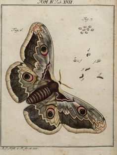'Insecten-Belustigung' (Insect Amusements) by AJ Rösel von Rosenhof