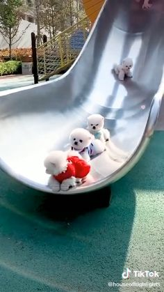 Teddy Bear Pomeranian, White Pomeranian Puppies, Cute Teacup Puppies, Cute Baby Puppies, Baby Animals Super Cute, Cute Little Animals, Cute Funny Dogs, Cute Funny Animals, Cute Puppy Videos