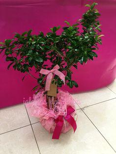 Este domingo 1 de mayo día de la madre regala flores #bonsai #ramos #flores #centros #centrodeorquideas #centrosdeflores #iglesiasfloristeria #diadelamadre #diadelamadre2016