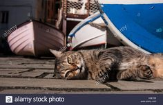 Lazy springtime? A cat between boats at Cinque Terre, Liguria #travel #lifestyle #cat #cinqueterre #springtime