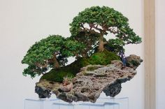 "Bonsai groves - [ The specimen shown above is not technically a bonsai because it is not planted in a shallow tray. But, this little beauty is too cool to ignore. 'Bonsai' translates roughly as ""tray-planted"". There is a Japanese word for pot planted miniature trees that pronouncing sounds like you sneezed, but I can't find it. Please HELP. - PSC]"
