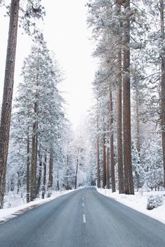 Yosemite Park // Alexandra Taylor