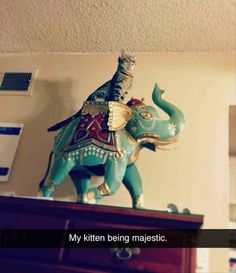 If I had a ceramic elephant I would make my cat pretend to ride it. Funny Pictures Of The Day – 77 Pics