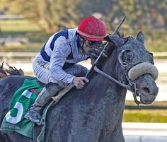 ARCADIA, Calif. – Eblouissante, a half-sister to Zenyatta, is bound for a graded stakes in March after winning an optional claimer at Santa Anita on Thursday to remain unbeaten in two starts.