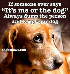 And the cat! Dog Poems, Dog Quotes, Animal Quotes, Funny Animal Memes, Funny Animals, Cute Animals, I Love Dogs, Puppy Love, Cute Dogs
