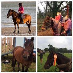 Potential Pony Club Pony - Pigbush Nutcracker aka Bobby http://www.equineclassifieds.co.uk/Horse/pigbush-nutcracker-aka-bobby-listing-1235.aspx#.VPctOiy4qq0