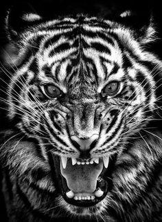 Tiger Tattoo Design, Tiger Design, Design Art, Tattoo Designs, Jesus Tattoo, Rose Wallpaper, Animal Tattoos, Big Cats, Hypebeast