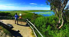 Painting Nauset Marsh