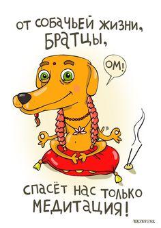 от собачьей жизни, братцы, спасет нас только медитация.