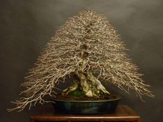 Amazing Japanese Small Bonsai You Have To See 08 Pond Plants, Bonsai Plants, Bonsai Garden, Garden Trees, Bonsai Pruning, Houseplant, Garden Art, Pre Bonsai, Popular Tree