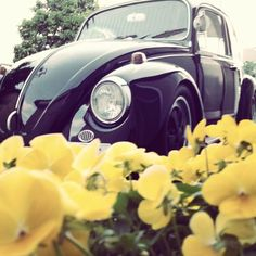 """VW """"Lovin the color"""" Please & Thank You"""""""