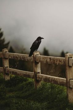 ponderation:  Common Raven by Andrew Wagner