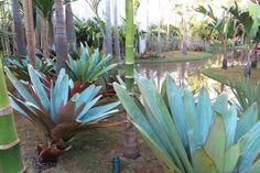 Jardim favorito da Casa Cor tem lago artificial de 500 m² - Casa -  paisagista Luis Carlos Orsini
