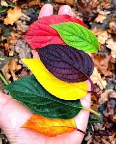 Autumn Leaf Color, Autumn Leaves, Autumn Nature, Autumn Fall, Winter, Deciduous Trees, Trees And Shrubs, Leaf Coloring, Colour Pallete