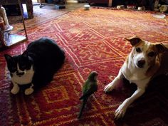 my huge cat Lemmy, my parrot Ivy & Bambi, the angel dog