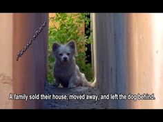 A family sold their house, moved away, and left the dog behind.  Please share to raise awareness.