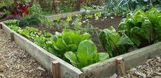 Eén vierkante meter, meer heb je niet nodig om je eigen  groenten te kweken.  Maar zorg dat je bak IN DE ZON staat !