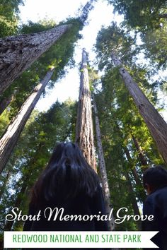 Guide and tips to visiting the Stout Grove Trail in Redwood National and State Parks with kids in California | National Parks with kids