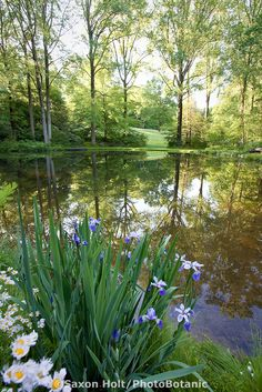 Dappled morning sunlight reflecting across pond in woodland garden, evironmentally-responsible, native plant sustainable garden, Mt Cuba Center Delaware