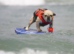 Google Image Result for http://wac.450f.edgecastcdn.net/80450F/thefw.com/files/2012/06/Surfing-dog-3-630x463.jpg