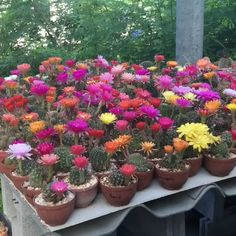 How to create beautiful shade garden pots using easy to grow plants with showy foliage and flowers. And plant lists for all 16 container planting designs! - A Piece Of Rainbow Cacti And Succulents, Cactus Plants, Container Plants, Container Gardening, Exotic Flowers, Beautiful Flowers, Purple Flowers, Fall Planters, Planters Shade