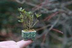 Dana Garden Design: Super mini bonsai blog