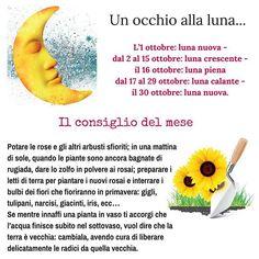 Un occhio alla #luna... L'1 ottobre: luna nuova - dal 2 al 15 ottobre: luna crescente - il 16 ottobre: luna piena  dal 17 al 29 ottobre: luna calante - il 30 ottobre: luna nuova.  Il consiglio del #mese #Ottobre  Potare le #rose e gli altri arbusti sfioriti; in una mattina di sole, quando  le #piante sono ancora bagnate di rugiada, dare lo zolfo in polvere  ai rosai; preparare i letti di terra per piantare i nuovi rosai e  interrare i bulbi dei #fiori che fioriranno in primavera: gigli…