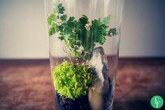 esik floresik: Forest in a Jar - Las w słoiku  It's amazing how simple this DIY project is! #forestinajar #ecofriendly #jargarden #giftidea #jar #garden #DIY #project