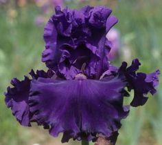 Comanche Acres Iris Gardens - Gower, MO - Rippling River-Tall Bearded Iris