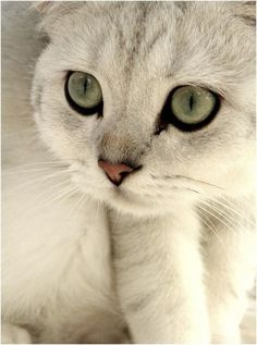 """Since each of us is only blessed with one life, why not live it with a cat?"" --Robert Stearns.  Pretty kitty!"