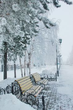 winter - soft snowfall covering brick sidewalks and wooden cast iron benches