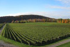 Niagara Wine Tours - Cave Spring Vineyard