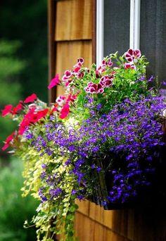 Container garden ~