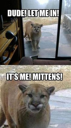 Mittens. Don't ever let him in