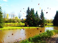 Photo taken a couple of years ago in the fall. It was taken at Centennial Park, Moncton, NB.