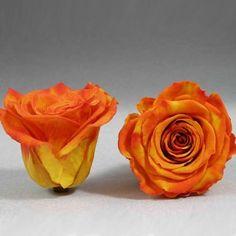 6 x Rose gefriergetrocknet stabilisiert echte Rose lange haltbar D ca. 6-7cm
