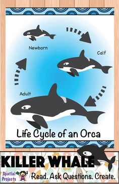 Life Cycle of the Orca (Arctic Animal) - Inquiry-based learning *Includes lapbook making guide, craft pattern, worksheets, reading passages, fun facts