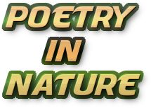 Poetry in Nature Site